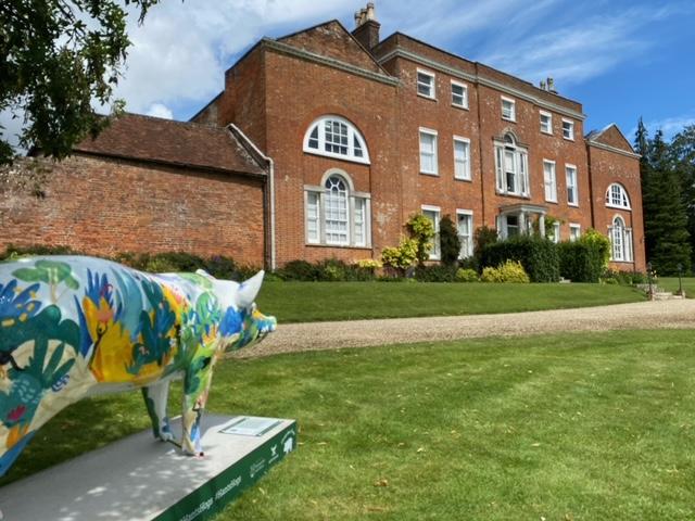 Hampshire hog at Worting House